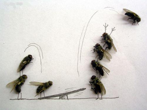 Dead_fly_art1