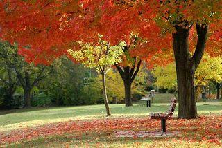 Bigstockphoto_Autumn_Colors_234255